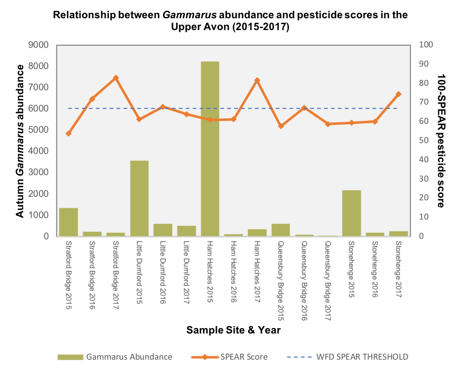 Graph showing that as SPEAR score goes over the WFD threshold, Avon Gammarus abundance mostly declines