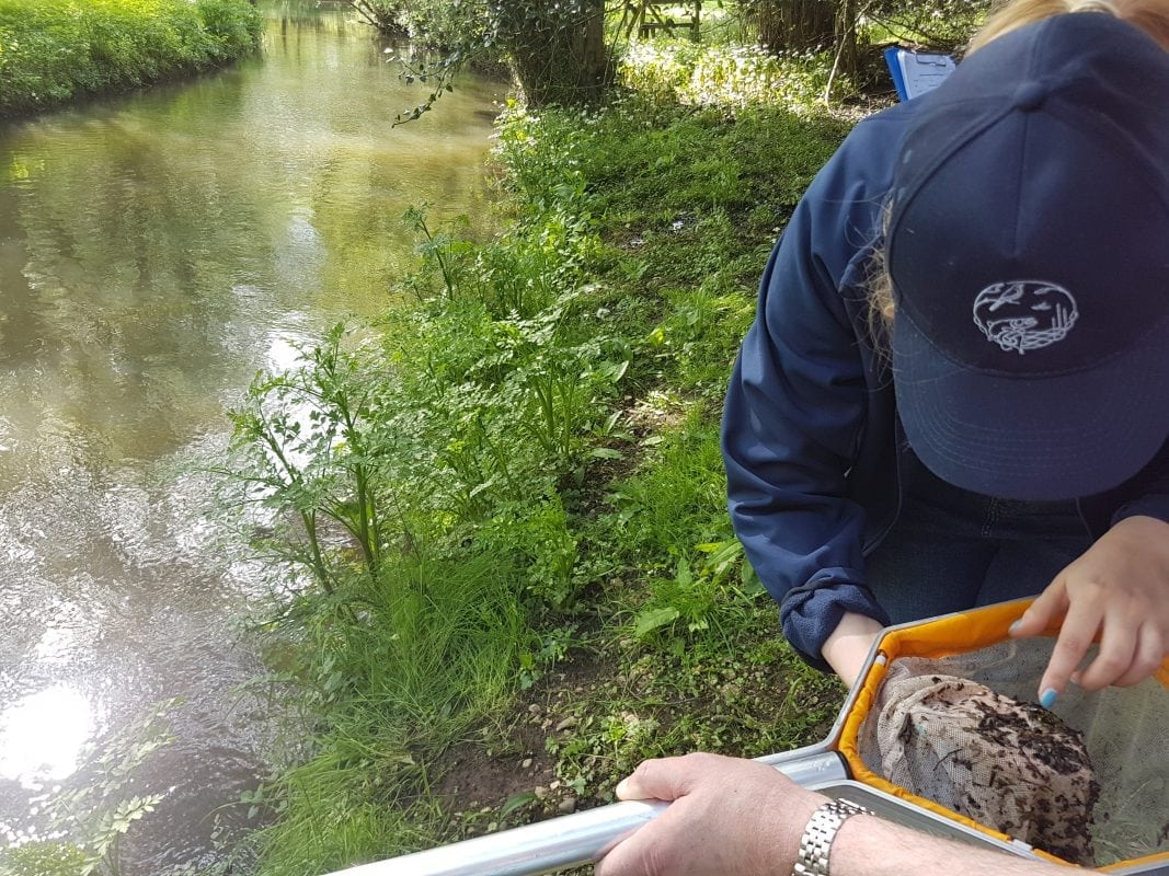 riverfly census wales
