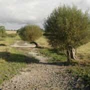 Dry riverbed on Upper Avon catchment