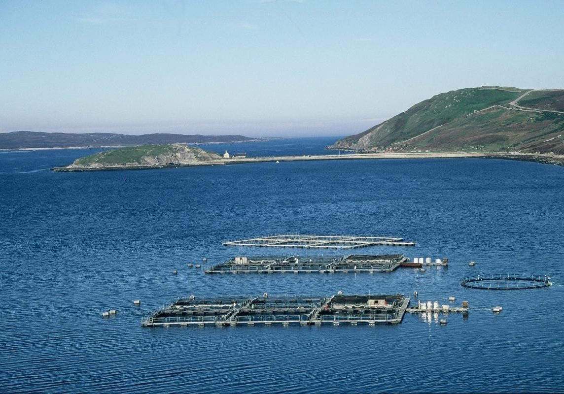 Scottish salmon farming expansion